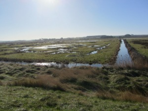 Deepdale marshes