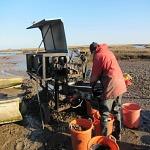 Fishermen grading mussels at Brancaster