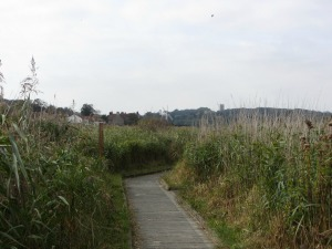 Board Walk at Cley Marshes