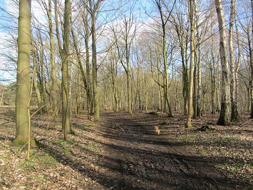 The start of the Peddars Way at Knettishall Heath