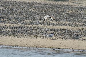Wildlife on Blakeney Point