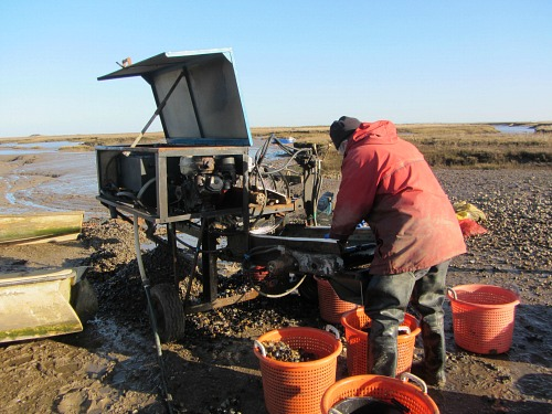 Grading the mussles at Brancaster Staithe