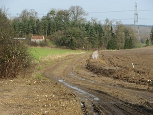 Castle Acre Circular walk around farm tracks