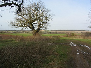 Countryside views on the circular walk around Castle Acre