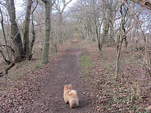 Woodland near Castle Acre
