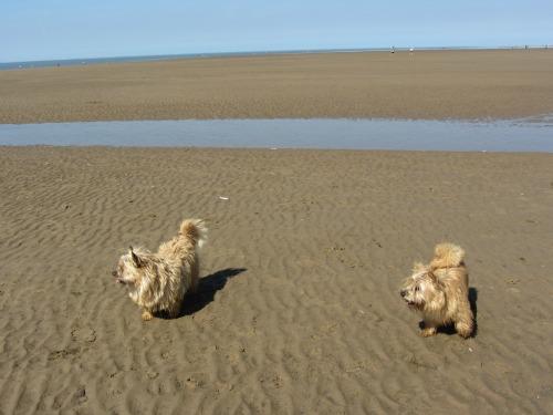 Is Old Hunstanton Beach Dog Friendly