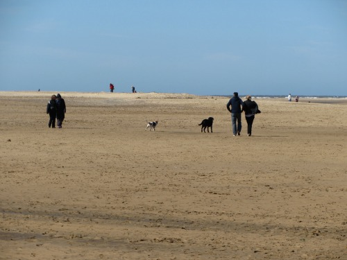 Dogs on beaches