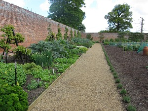 Fruit trees in the walled garden at Felbrigg Hall