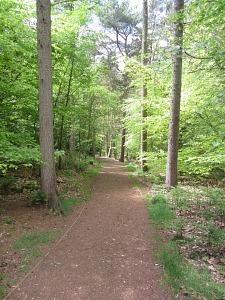 Felbrigg Hall Woodland walk