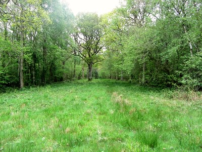NWT Foxley Wood, Norfolk