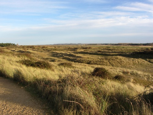 Looking inland from Holme Dunes