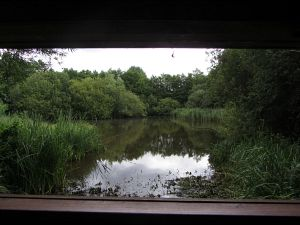 View from the hide at Gooderstone Water Gardens