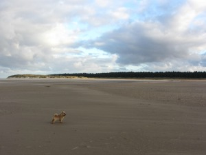 Dog friendly beach at Holkham