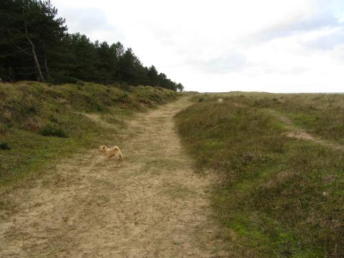 Holkham beach sand dunes