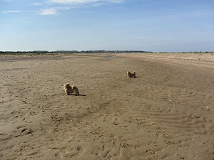 Dog Friendly Holme Beach