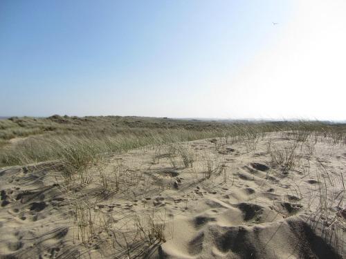 Horsey Warren sand dunes