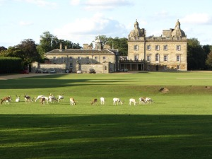 The Park at Houghton Hall