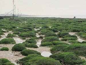 Unusual bolders at low tide