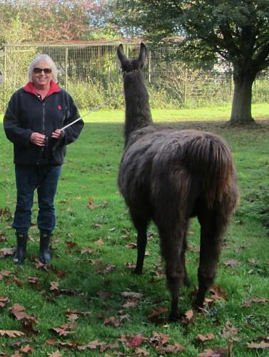 Julia with Smokey the Llama