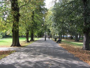 The tree-lined avenue in The Walks, Kings Lynn