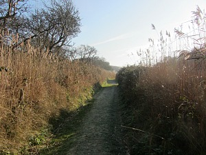 Brambles cut away to make the Norfolk Coast Path