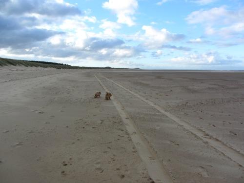 Running free at Holkham Beach