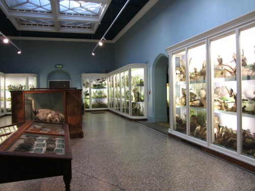 Natural History at Norwich Castle Museum