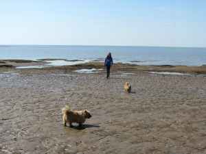 Dog Friendly Hunstanton Norfolk