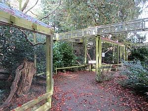 The red squirrel enclosure at Pensthorpe