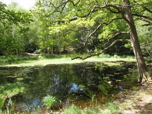 PIngo Ponds in Norfolk