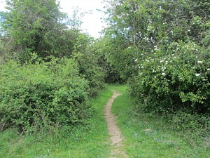 A path along the Pingo Trail Walk