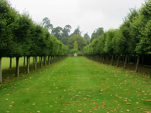 The avenue of pleached lime trees