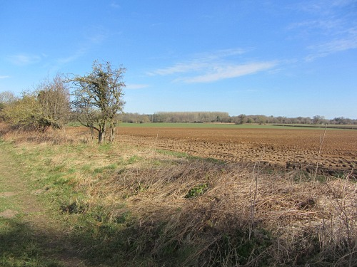 Norfolk's open countryside along the Peddars Way