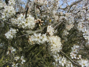 Flora and fauna along the Peddars Way