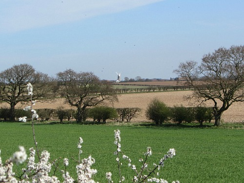Bircham Windmill in the distance