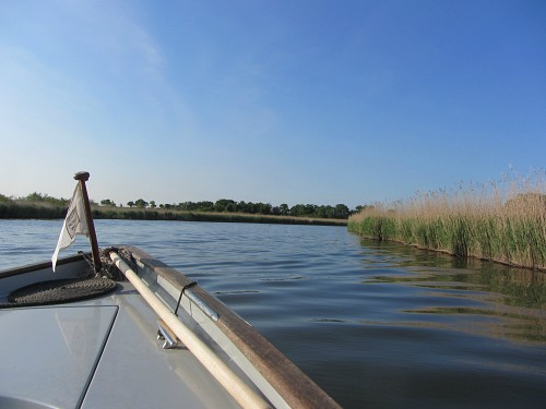 A Norfolk Wildlife Trust boat trip to St Benet's Abbey and Ranworth Broad