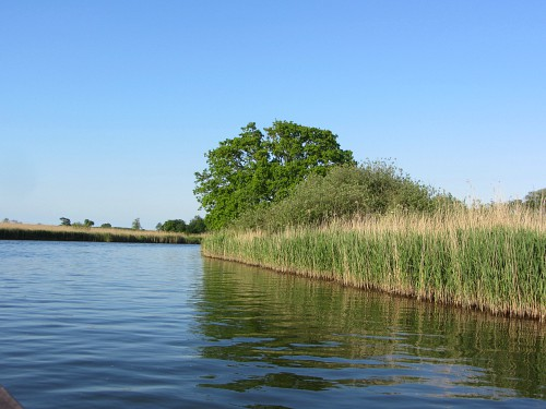 The River Bure on one of the Norfolk Wildlife Trust's boat trips