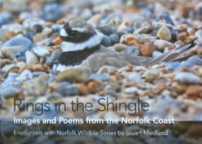 Read more about Rings in the Shingle here