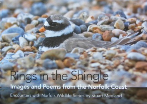 Rings in the Shingle Norfolk Wildlife Book