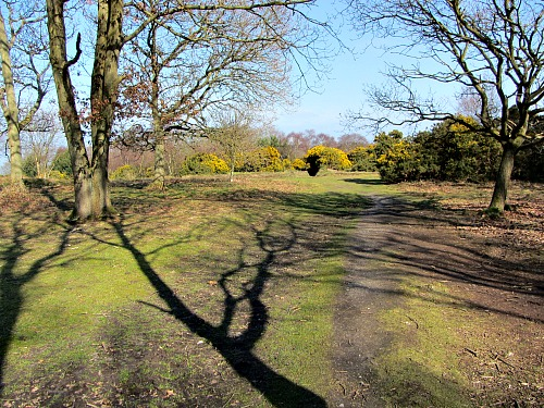 The heath at the Roman Camp