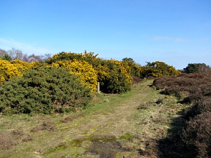 Bearing slightly right through the heather and gorse