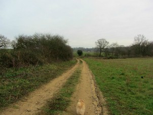 The countryside around Roydon Common