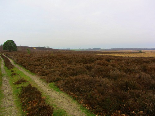Roydon Common, near King's Lynn