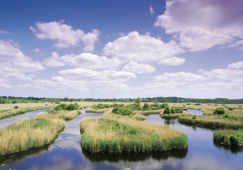 RSPB Strumpshaw Fen Events