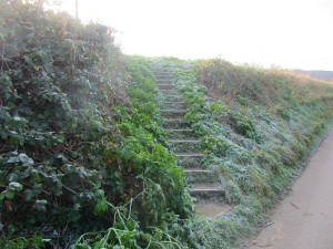 The steps to look out for in the bank just outside the village of Salthouse