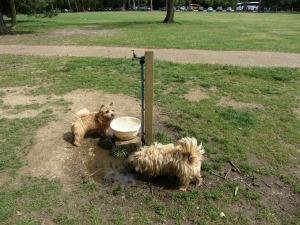 Dog friendly Norfolk