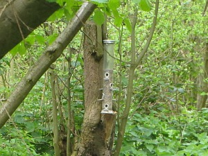 Lots of bird feeders dotted around the reserve to attract a whole host of species.