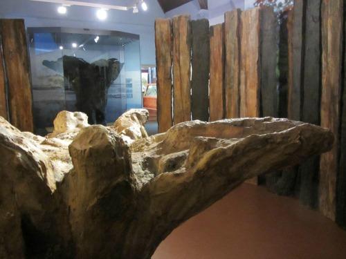 Seahenge at Lynn Museum