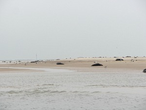 Grey Seals at Blakeney Point in the winter months