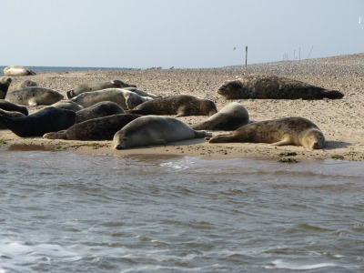 Seal trips in Norfolk